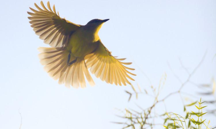 registro-fotografico-passaro-voando-no-parque-do-ibirapuera-por-joao-eduardo-fotos-147